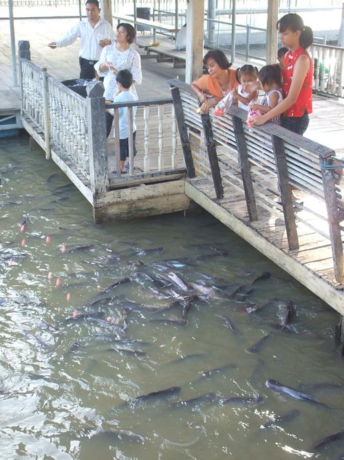 Temple_fish